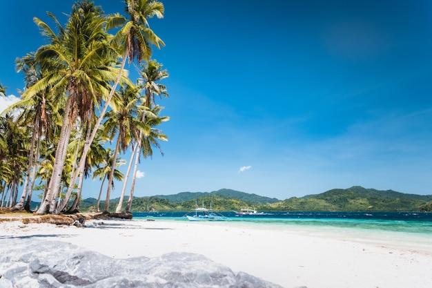 Tropical sandy beach with coconut palm in el nido, palawan, philippines.