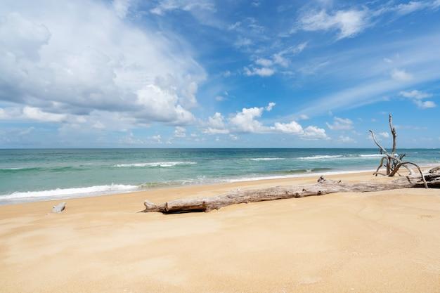 自然の背景または夏の季節の背景の青い海と青い空の背景画像のビーチに枯れ木の幹を持つ熱帯砂浜。