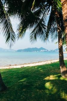 뜨거운 화창한 날에 야자수 숲과 푸른 하늘이 있는 열대 모래 해변, 아무도 없습니다.