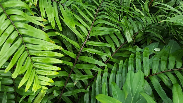 A tropical scene of fern forest