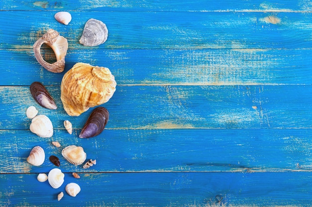 Tropical sea background. different shells on the blue boards, top view. free space for inscriptions. summer theme.