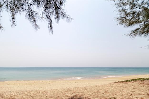Tropical sea white sand beach with leaves frame