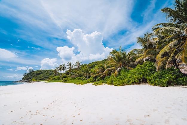 ココヤシの木が生い茂る熱帯の人里離れた砂浜。上に白い雲と青い空。