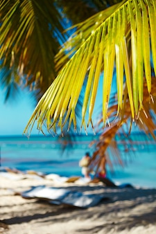 Tropical summer beach with palm leaf tree branch over sea and sky background