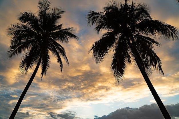 Тропический закат с силуэтом пальмы с драматическими облаками. концепция отпуска и путешествий. фото высокого качества
