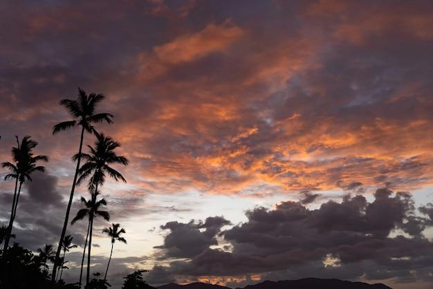 Тропический закат с силуэтом пальмы с драматическими облаками, концепция отпуска и путешествия