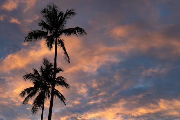Тропический закат с силуэтом пальмы с драматическими облаками. Premium Фотографии