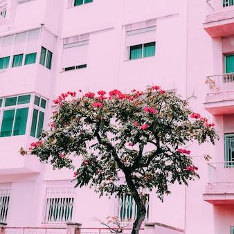 Tropical tree. canary island. travel vibes