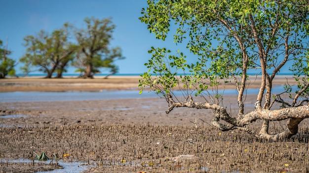 海のビーチの熱帯の木