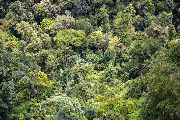 Тропические деревья в лесе джунглей на холме горы около города danang, вьетнама. вид сверху