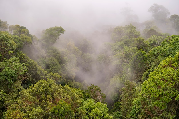 Tropical trees in the jungle forest with the morning fog on a mountain hill