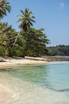 Тропические деревья на пляже с белым песком и бирюзовой чистой водой на острове в индонезии