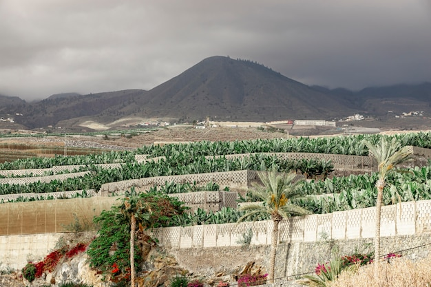 Tropical trees with a mountain background