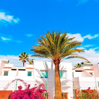 Tropical vacation vibes palm beach mood