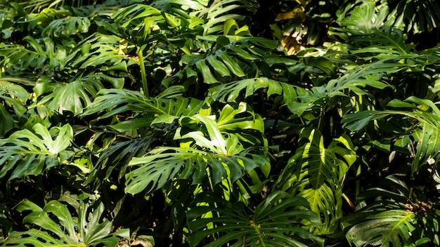 熱帯植物と植物