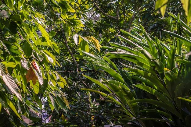 Tropical vegetation detail in dominican republic