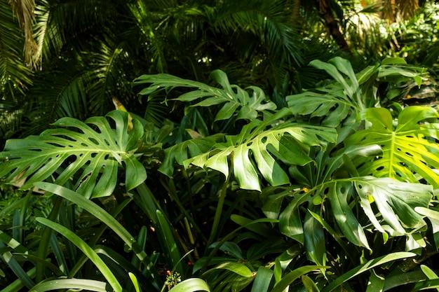 熱帯の新緑と植物