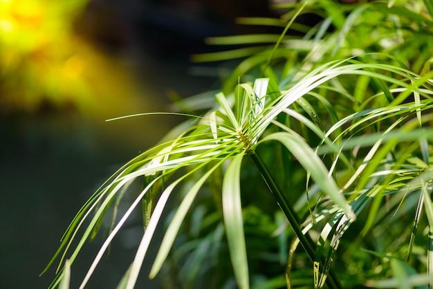 Tropical view. papyrus plants