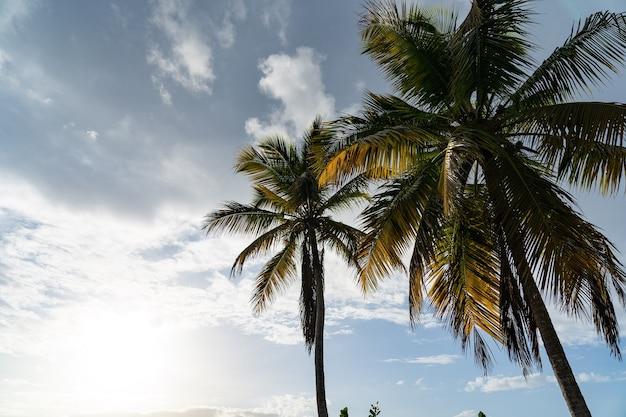 Тропический вид с силуэтом пальмы с голубым небом и облаками. концепция отпуска и путешествий.