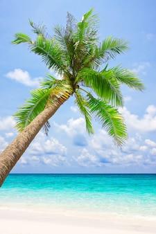 Тропический пляж с белым песком и пальмой. ко куд, таиланд