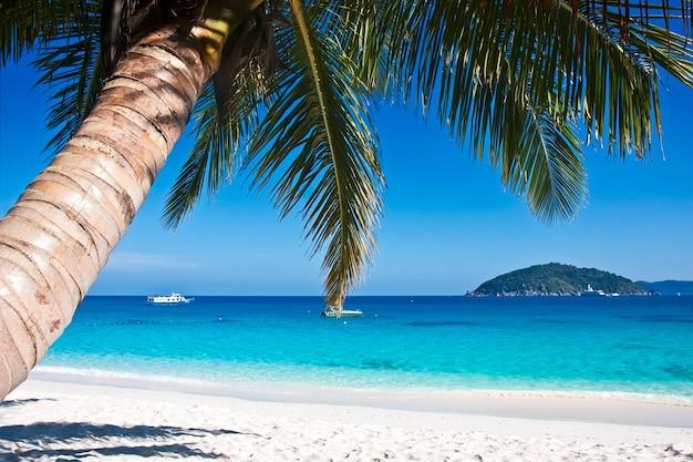 야자수와 열 대 하얀 모래 해변입니다. 시밀란 제도, 태국, 푸켓.