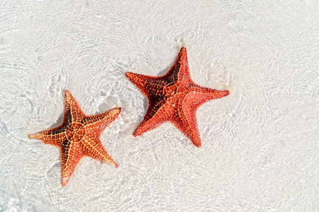Tropical white sand with red starfishes
