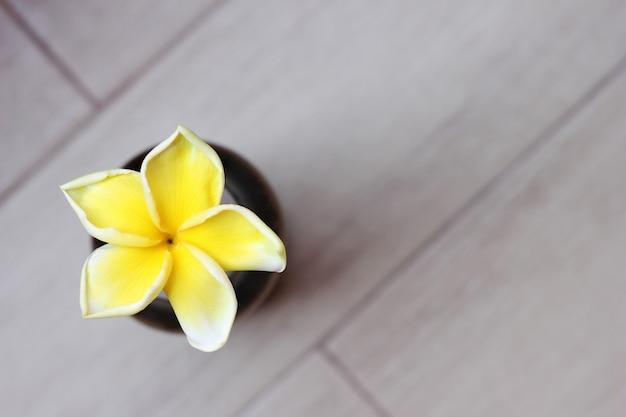 Tropical yellow frangipani flower on grey background