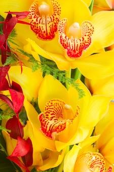 Тропические желтые цветы орхидеи и листья крупным планом