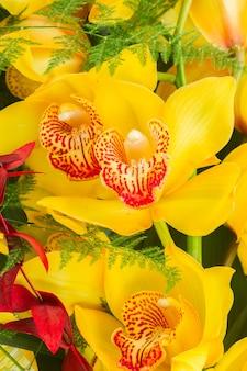 Тропические желтые цветы орхидеи крупным планом