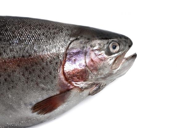 分離されたマス川の魚