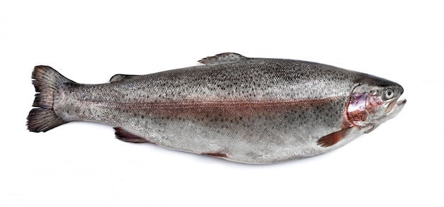 Trout river fish isolated