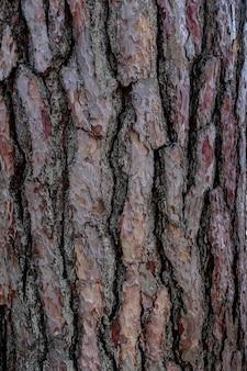Trunk bark texture.