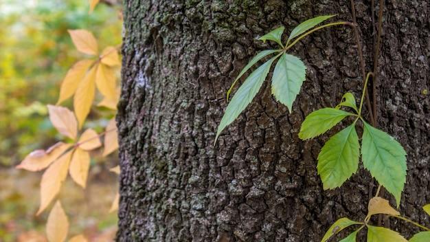 緑の植物が乗ったワイドスリーの幹