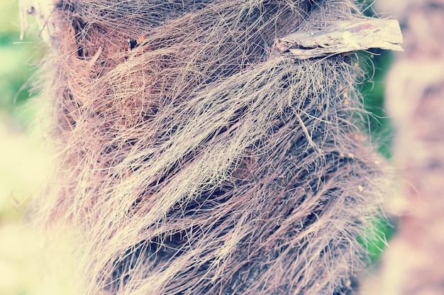 Ствол молодой пальмы