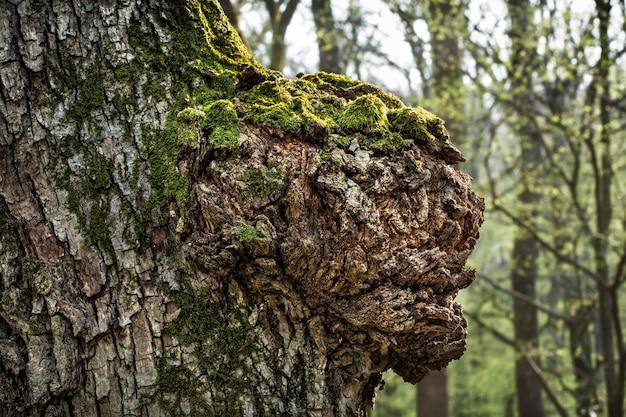 春の森の古い木の幹