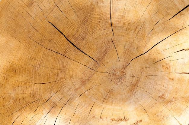 製材された木の幹。表面には多数の亀裂があり、リングが見えます。写真のクローズアップ