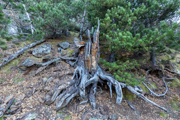 Ствол, корни упавшего дерева