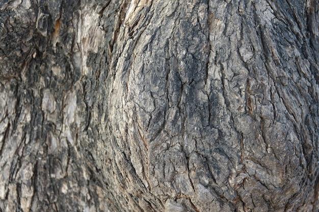 Struttura tronco
