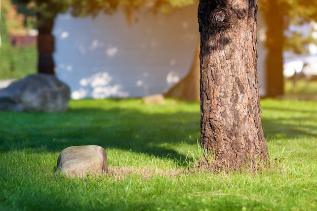 Trunk of a tree and big stone on green grass loan.