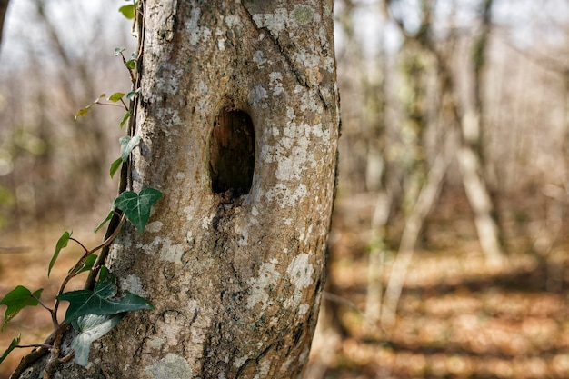Trunk of tree with hole, in the park