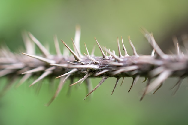 The trunk of a very prickly plant. the prickly thorns on the plant.