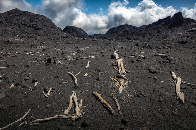 Trunks of dead trees on the volcanic rock of etna.