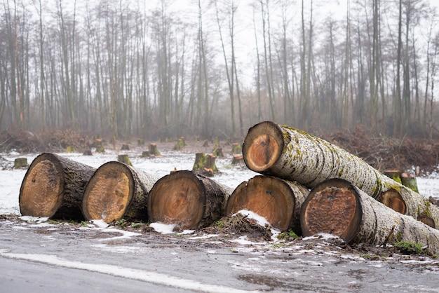 背景に多くの切り株がある道端に倒れた木の幹