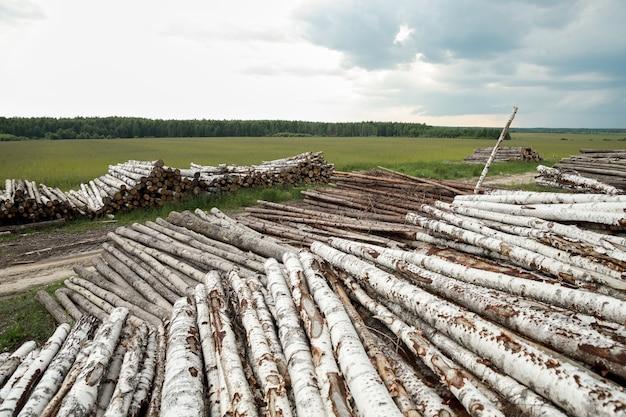 Стволы деревьев срезаны и сложены, на переднем плане зеленый лес.