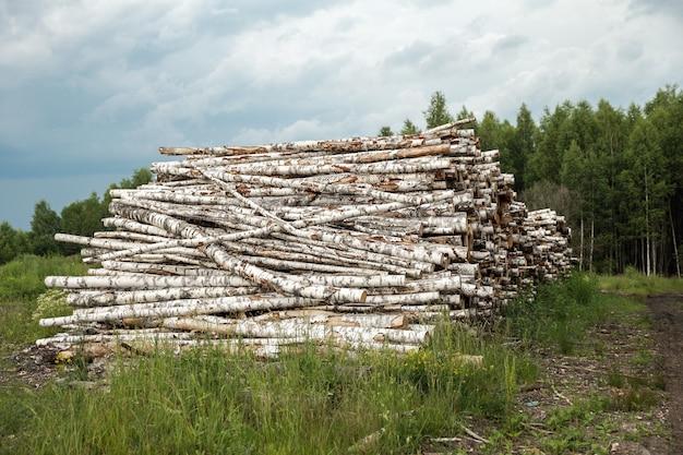 Стволы деревьев срезаны и сложены, на переднем плане зеленый лес. Premium Фотографии