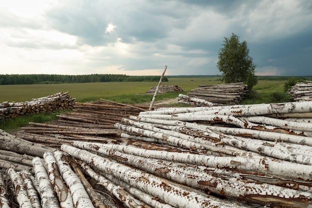 木の幹が切り取られ、前景に積み上げられています