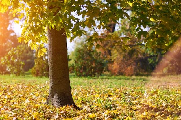 夜の秋の公園で木の幹