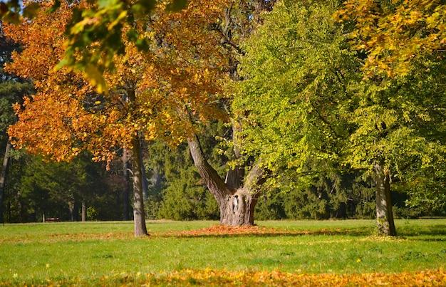 Стволы деревьев в парке с газоном и опавшими листьями