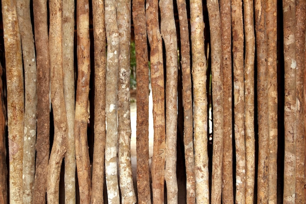 Trunks wooden wall in rainforest jungle house