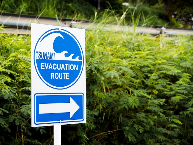 Tsunami evacuation route sign on green leaves near the road with copy space. road sign message